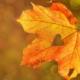 offerta autunno